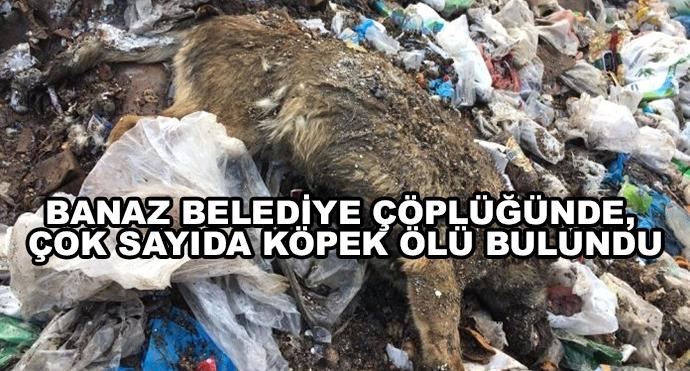 Banaz Belediye Çöplüğünde, Çok Sayıda Köpek Ölü Bulundu
