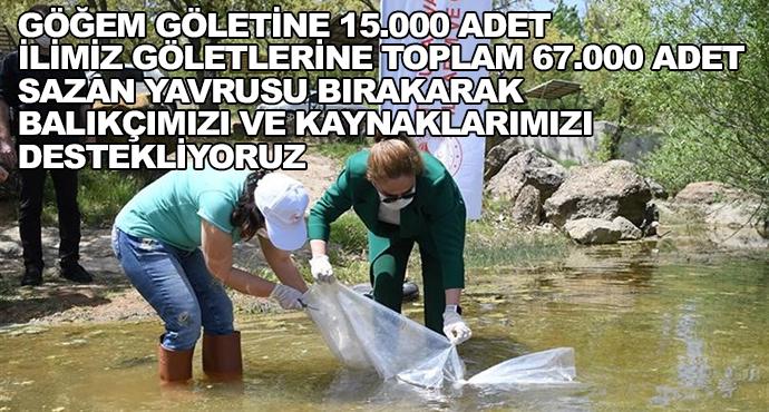 Göğem Göletine 15.000 Adet İlimiz Göletlerine Toplam 67.000 Adet Sazan Yavrusu Bırakarak Balıkçımızı Ve Kaynaklarımızı Destekliyoruz