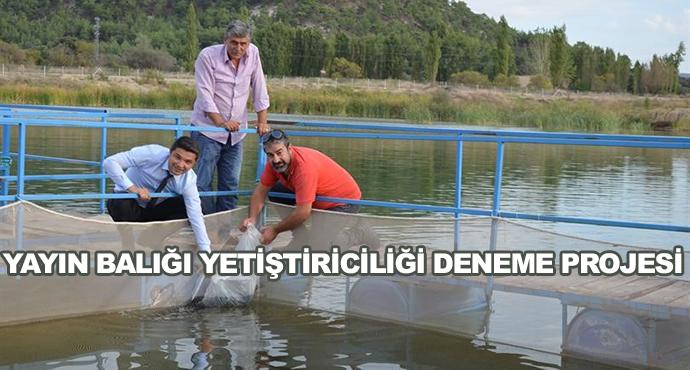 Yayın Balığı Yetiştiriciliği Deneme Projesi