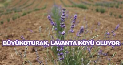 Büyükoturak, Lavanta Köyü Oluyor