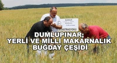 Dumlupınar; Yerli Ve Milli Makarnalık Buğday Çeşidi