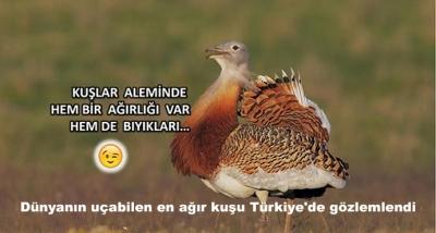 Dünyanın Uçabilen En Ağır Kuşu Türkiye'de Gözlemlendi
