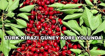 Türk Kirazı Güney Kore Yolunda