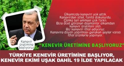Türkiye Kenevir Üretimine Başlıyor,Kenevir Ekimi Uşak Dahil 19 İlde Yapılacak