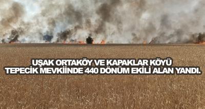 Uşak Ortaköy Ve Kapaklar Köyü Tepecik Mevkiinde 440 Dönüm Ekili Alan Yandı.